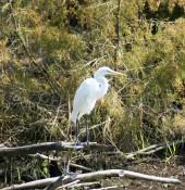 Permuda Island – Topsail Island North Carolina